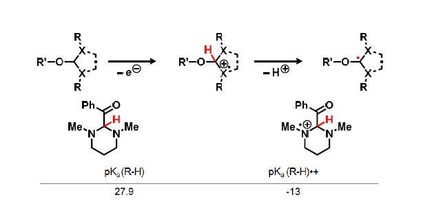 양성라디칼 중간체의 반응성