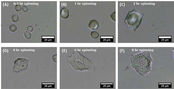 전기방사시간에 따른 SA microhydrogel 내 PLA fiber 밀도 변화