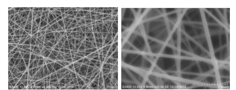 2시간 광가교 후 chitosan nanofiber의 morphology