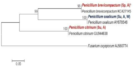 Calmodulin sequence를 이용한 청양과 장흥에 소재한 재배사내 공기 중에 존재하는 Penicillium 속의 phylogenetic analysis