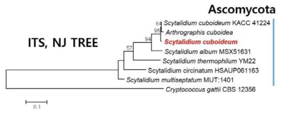 Internal transcribed spacer sequence를 이용한 중국 절강성에서 수입한 수입배지에 분리한 진균의 phylogenetic analysis.