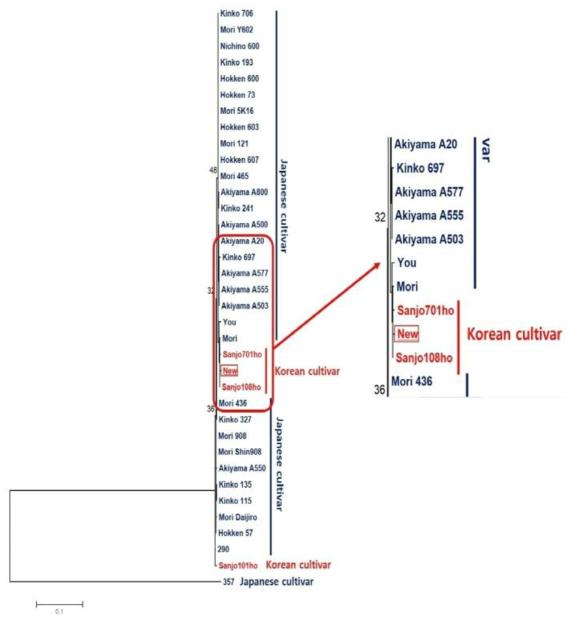 일본품종 및 국내품종과 국내신품종의 IGS (Intergenic spacer) 1 region sequence를 이용한 phylogenetic tree