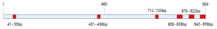 표고 IGS (Intergenic spacer) 1 region sequence 모식도
