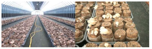지면재배 재배현황(재배기간 4월-10월, 봄-가을 재배)