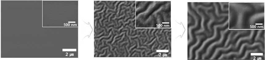PDMS 기판에 대한 이온 입사 에너지/양에 따른 표면구조 변화 사진