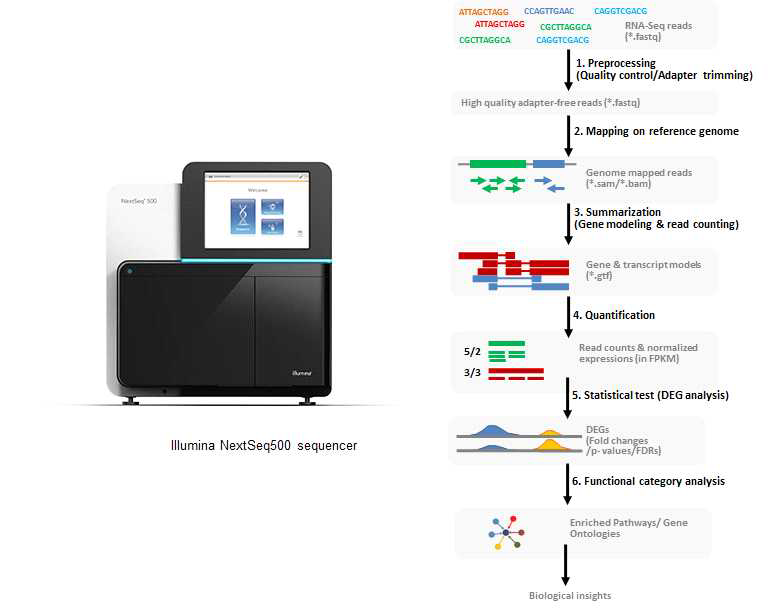Transcriptome analysis flow by illumina sequencing