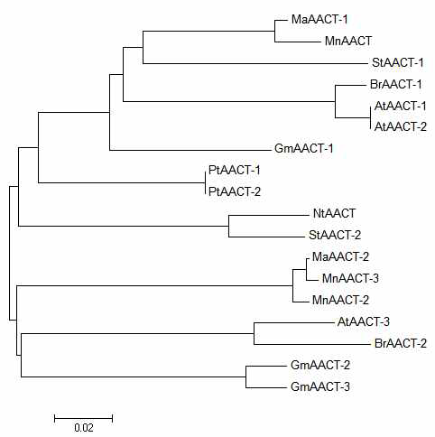 Phylogenic tree of MaAACT and some of its homologues.
