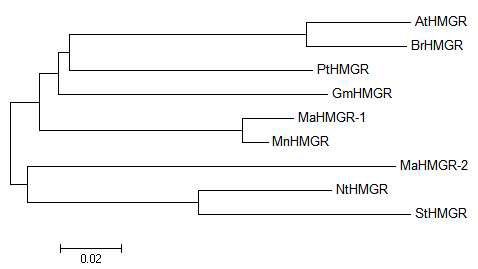 Phylogenic tree of MaHMGR and some of its homologues.