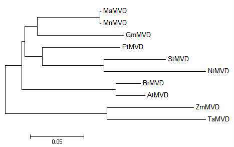 Phylogenic tree of MaMVK and some of its homologues.