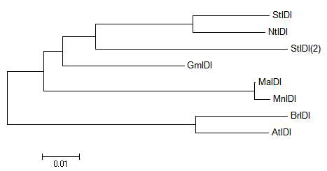 Phylogenic tree of MaPMK and some of its homologues.