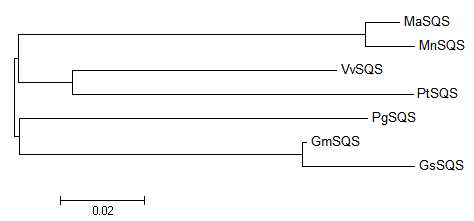 Phylogenic tree of MaSQS and some of its homologues.