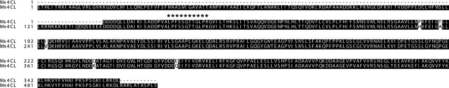 Multi-alignment of amino acid sequences of Ma4CL and Mn4CL with other 4CLs.