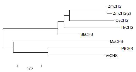Phylogenic tree of MaCHS and some of its homologues.
