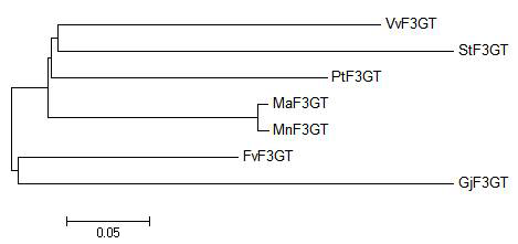Phylogenic tree of MaF3GT and some of its homologues.