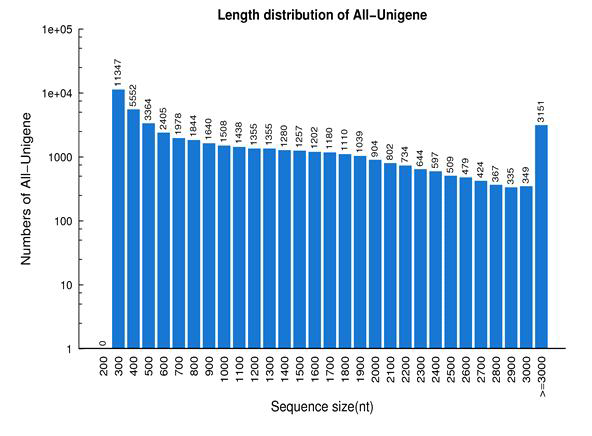 Length distribution of all-unigenes in mulberry fruit transcriptome.
