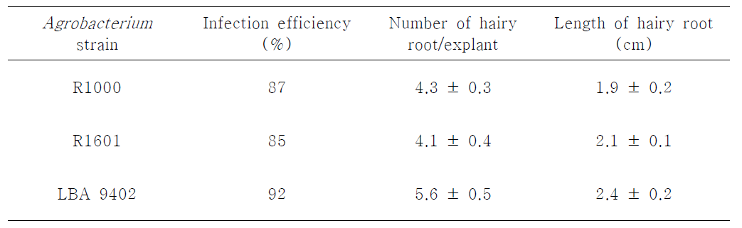 Effects of different A. rhizogenes strains on hairy root induction of Morus alba L.
