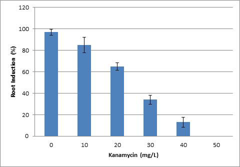 Effect of different concentrations of Kanamycin on hairy root induction from leave of Morus alba within three weeks after inoculation with A. rhizogenes strain R1000.