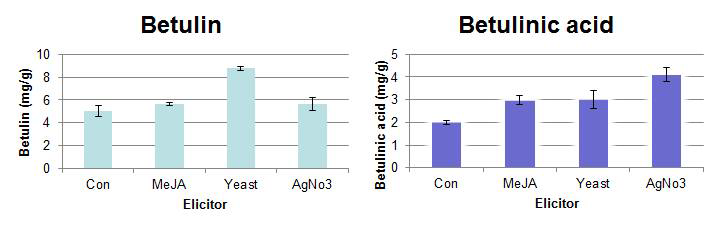Effect of methyl jasmonate, yeast extract, AgNO3 on betulin and betulinic acid biosynthesis. in root culture of Morus alba L.