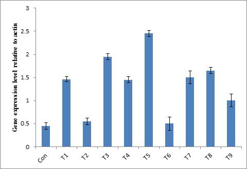 Transcript levels of MaSQS in transgenic hairy root lines.