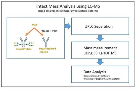 Intact mass 분석 절차