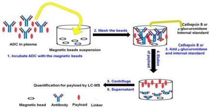 ADC의 antibody-conjugated drug 정량에 대한 샘플 전처리 과정