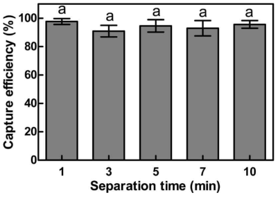 Effect of separation time on capture efficiency (CE) of 0.4 mg immunomagnetic beads against S. aureus at concentration of 1.48×105 CFU/mL