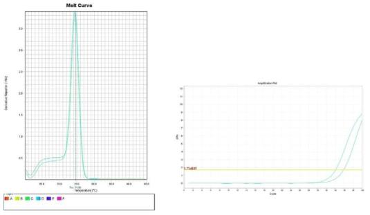 배추. Amplification plot and melt curve for detection of B. cereus with DNA extracted from inoculated chinese cabbage by two kits, PrepMan kit and DNeasy mericon Food Kit