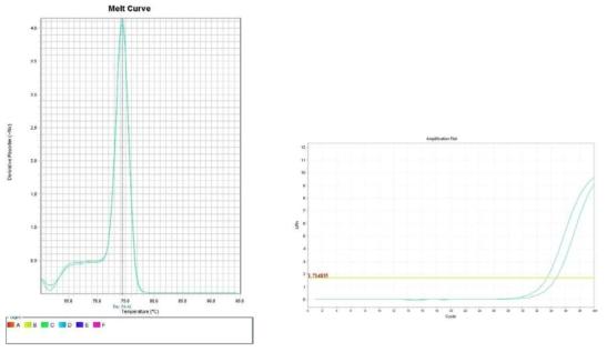 상추 Amplification plot and melt curve for detection of B. cereus with DNA extracted from inoculated lettuce by two kits, PrepMan kit and DNeasy mericon Food Kit.