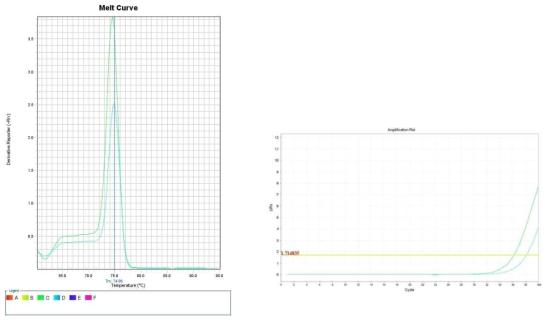 시금치. Amplification plot and melt curve for detection of B. cereus with DNA extracted from inoculated spinach by two kits, PrepMan kit and DNeasy mericon Food Kit.