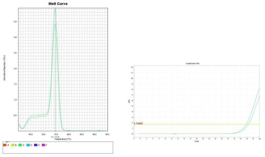콩나물. Amplification plot and melt curve for detection of B. cereus with DNA extracted from inoculated sprout by two kits, PrepMan kit and DNeasy mericon Food Kit