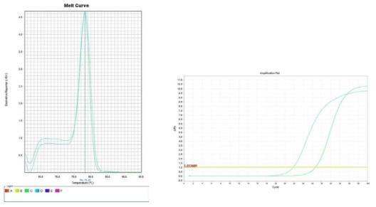 배추. Amplification plot and melt curve for detection of L. monocytogenes with DNA extracted from inoculated Chinese cabbage by two kits, PrepMan kit and DNeasy mericon Food Kit.