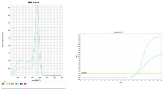 상추. Amplification plot and melt curve for detection of L. monocytogenes with DNA extracted from inoculated lettuce by two kits, PrepMan kit and DNeasy mericon Food Kit.