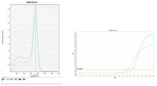 시금치. Amplification plot and melt curve for detection of L. monocytogenes with DNA extracted from inoculated spinach by two kits, PrepMan kit and DNeasy mericon Food Kit.
