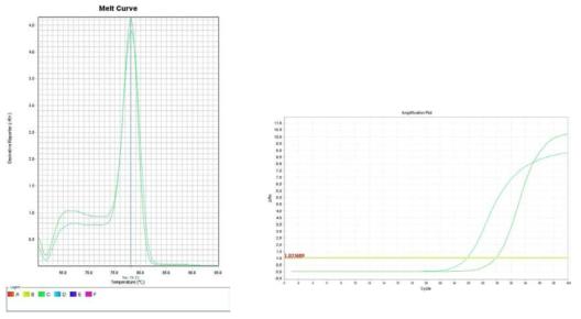 콩나물. Amplification plot and melt curve for detection of L. monocytogenes with DNA extracted from inoculated sprout by two kits, PrepMan kit and DNeasy mericon Food Kit