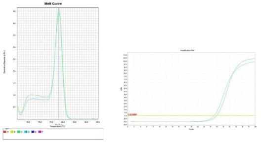 토마토. Amplification plot and melt curve for detection of L. monocytogenes with DNA extracted from inoculated tomato by two kits, PrepMan kit and DNeasy mericon Food Kit.