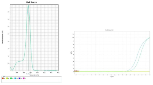 배추. Amplification plot and melt curve for detection of S. aureus with DNA extracted from inoculated chinese cabbage by two kits, PrepMan kit and DNeasy mericon Food Kit.