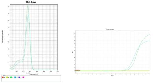콩나물. Amplification plot and melt curve for detection of S. aureus with DNA