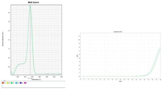 토마토. Amplification plot and melt curve for detection of S. aureus with DNA
