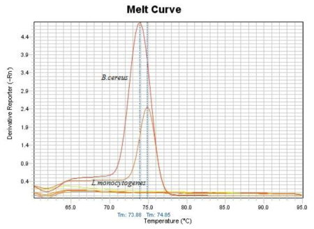 Melting curve analysis of the amplification products of B. cereus specific gyrB gene in specificity test