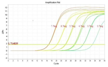 Amplification curves of B. cereus with the real time PCR.