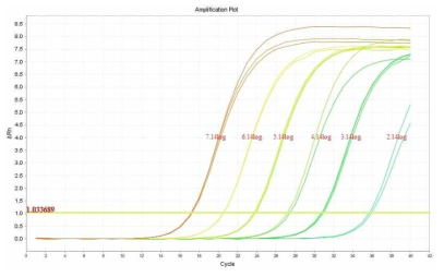 Amplification curves of L.monocytogenes with the real time PCR.