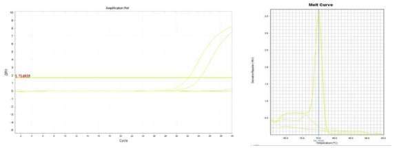 Amplification plot and melt curve for B. cereus in sprout.