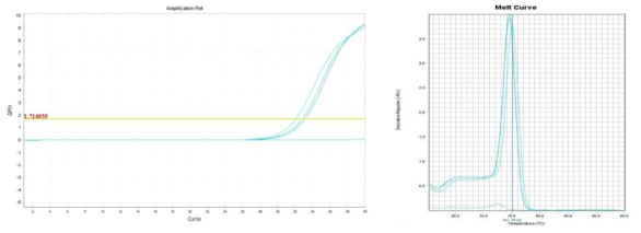 Amplification plot and melt curve for B. cereus in lettuce with IMS.