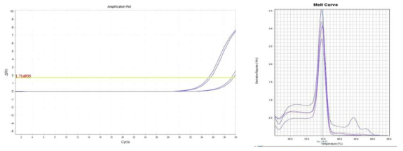 Amplification plot and melt curve for B. cereus in sprout with IMS.