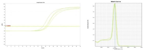 Amplification plot and melt curve for B. cereus in lettuce after enrichment.