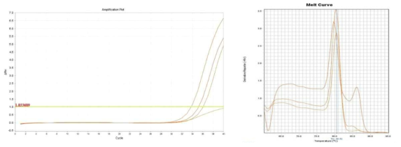 Amplification plot and melt curve for L. monocytogenes in spinach.