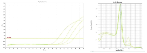 Amplification plot and melt curve for L. monocytogenes in lettuce after enrichment.