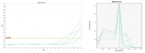 Amplification plot and melt curve for L. monocytogenes in sprout after enrichment.