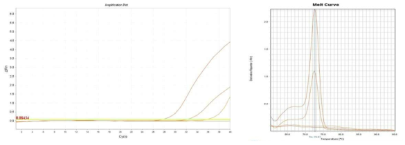 Amplification plot and melt curve for S. aureus in spinach.