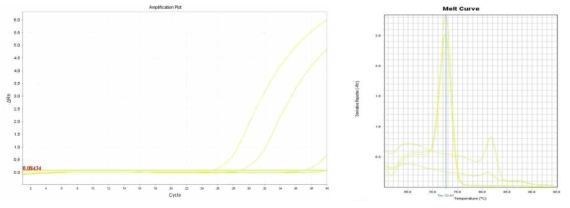 Amplification plot and melt curve for S. aureus in sprout.